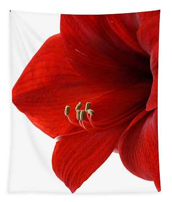 Amaryllis On White 3 Tapestry