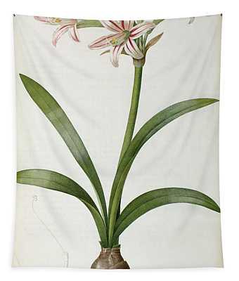 Amaryllis Vittata Tapestry