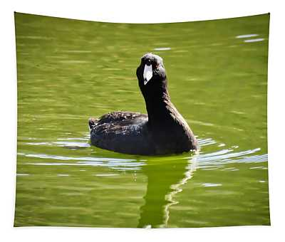 American Coot Portrait Tapestry