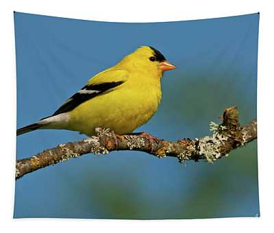 American Goldfinch Perched In A Tree Tapestry