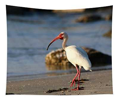 American White Ibis Tapestry