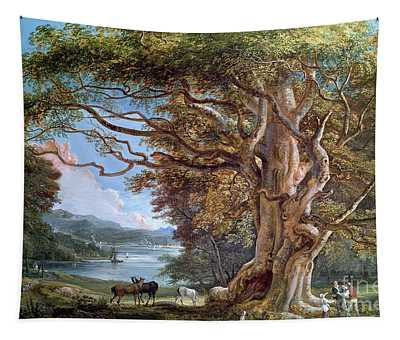 An Ancient Beech Tree Tapestry
