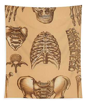 Anatomical Study Of The Human Skeleton, 1896 Tapestry