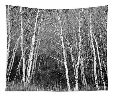 Aspen Forest Black And White Print Tapestry