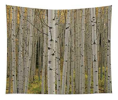 Aspen Grove In Fall, Kebler Pass Tapestry