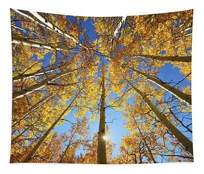 Aspen Tree Canopy 2 Tapestry