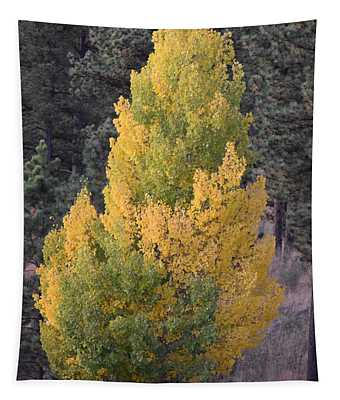Aspen Tree Fall Colors Co Tapestry