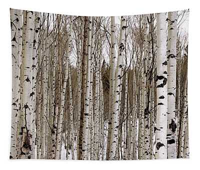Aspens In Winter Panorama - Colorado Tapestry
