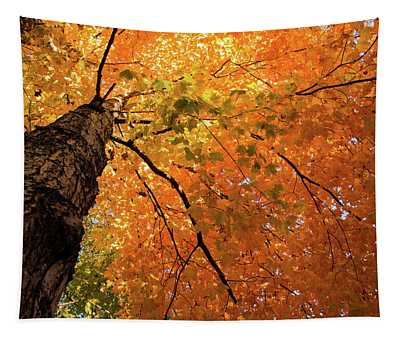 Autumn Canopy In Maine Tapestry