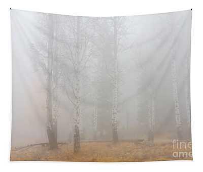 Autumn Reveals Tapestry