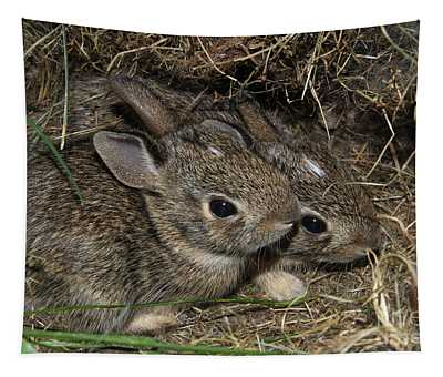 Baby Bunnies Tapestry