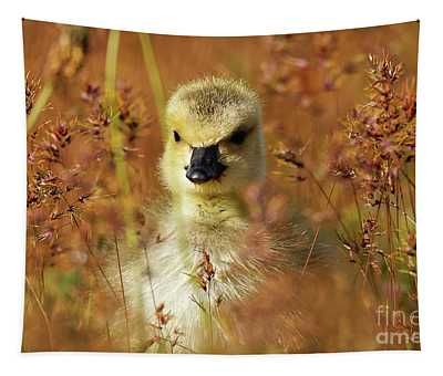 Baby Cuteness - Young Canada Goose Tapestry