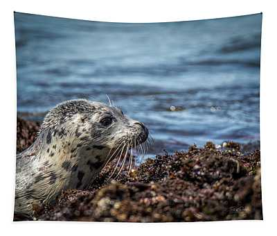 Baby Seal Tapestry