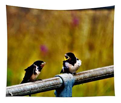 Baby Swallows Tapestry