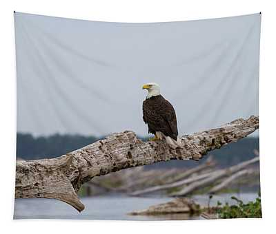 Bald Eagle #1 Tapestry