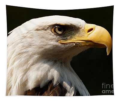Bald Eagle Delight Tapestry
