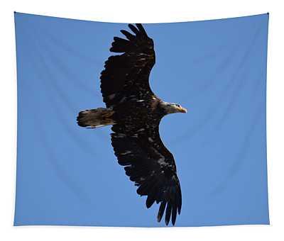 Bald Eagle Juvenile Soaring Tapestry