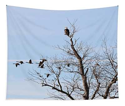 Bald Eagle Watches Geese Fly By 2172 Tapestry