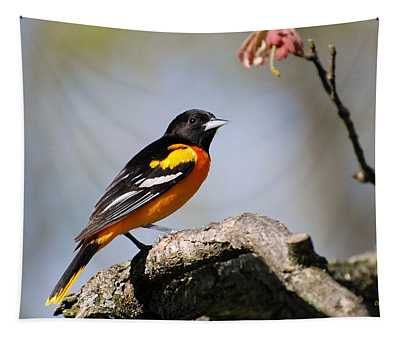 Baltimore Oriole Tapestry