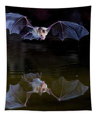 Bat Flying Over Pond Tapestry