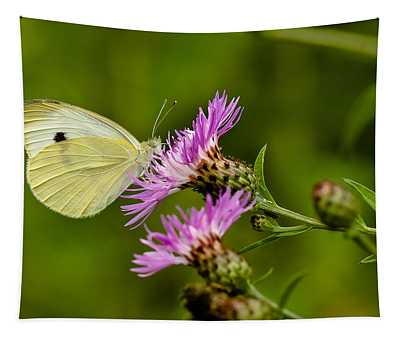 Beautiful Butterfly On Pink Thistle Tapestry