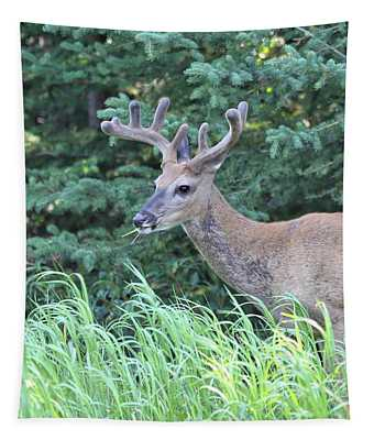 Beautiful Mule Deer Tapestry