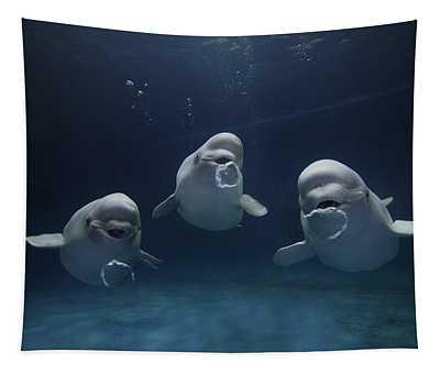 Beluga Delphinapterus Leucas Whale Trio Tapestry