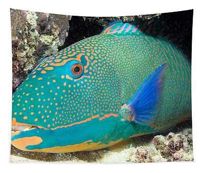 Bicolor Parrotfish Tapestry