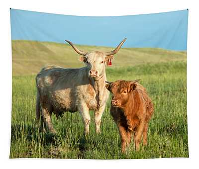 Cattle Wall Tapestries