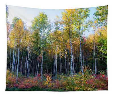 Birch Trees Turn To Gold Tapestry