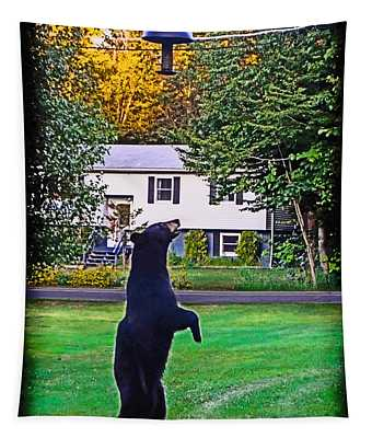 Tapestry featuring the photograph Black Bear Vs Bird Feeder 2  by Gary Keesler