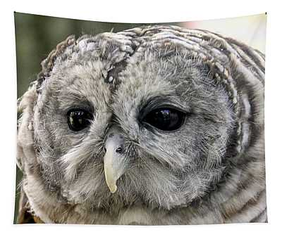 Black Eye Owl Tapestry