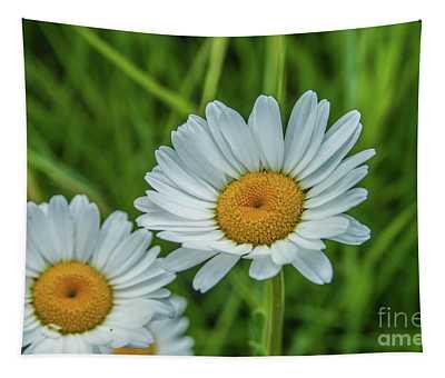 Black-headed Daisy's Tapestry