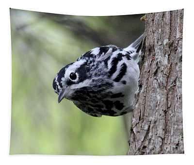 Black-n-white Warbler Tapestry