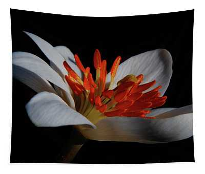 Bloodroot Art Tapestry