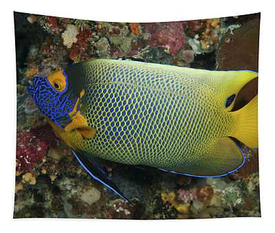 Blue Face Angelfish Tapestry