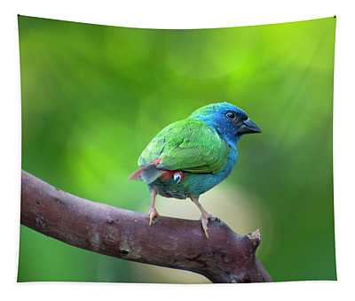 Blue-faced Parrotfinch Tapestry
