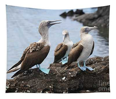 Blue Footed Booby Grooming Session Tapestry