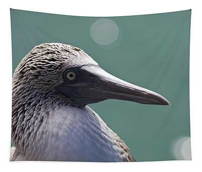Blue Footed Booby II Tapestry