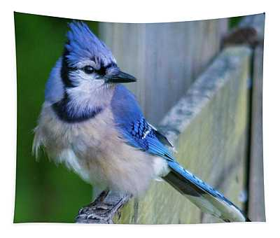 Blue Jay Fluffed Tapestry