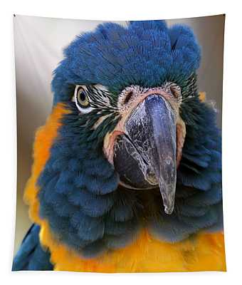 Blue-throated Macaw Close-up Tapestry