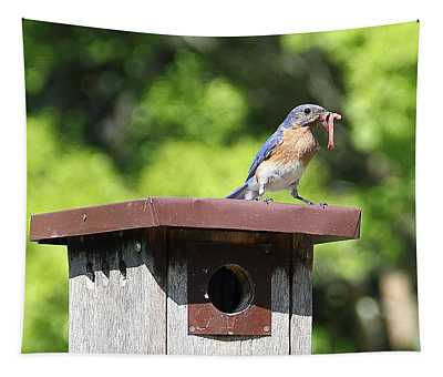 Bluebird Breakfast Feeding Tapestry