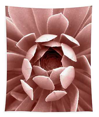 Blush Pink Succulent Plant, Cactus Close Up Tapestry
