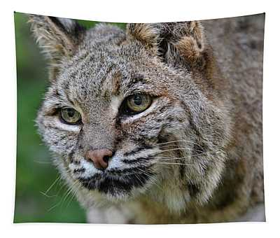 Bobcat In The Trees Tapestry