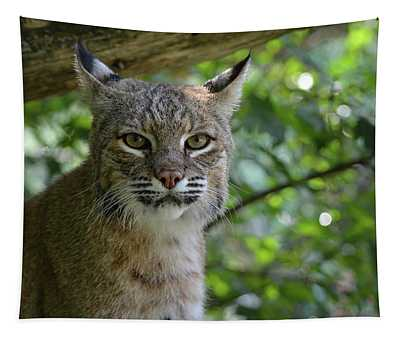 Bobcat Staring Contest Tapestry