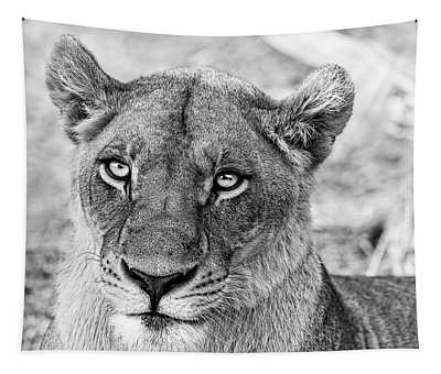 Botswana  Lioness In Black And White Tapestry