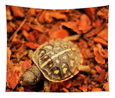 Box Turtle Tapestry