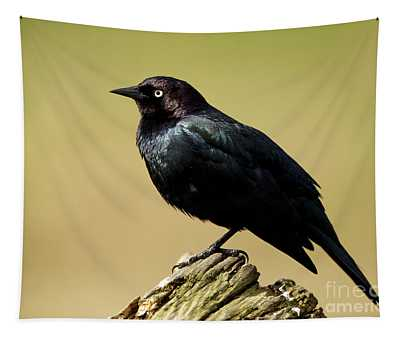 Brewers Blackbird Resting On Log Tapestry