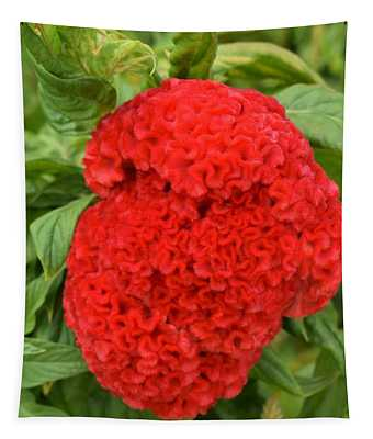 Bright Red Cockscomb Tapestry