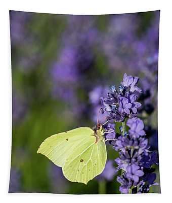 Brimstone Butterfly And The Lavender Tapestry